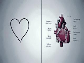 Gambar 4 Cara Menjaga Jantung Tetap Sehat Dan Kuat