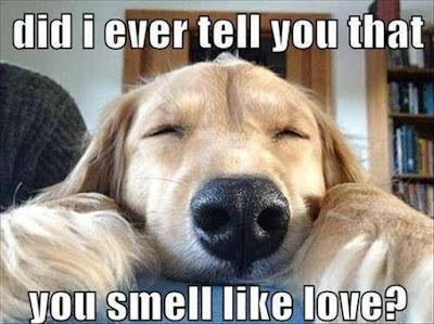 Funny dog pictures : you smell so good