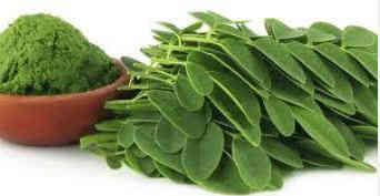 manfaat dan khasiat daun kelor untuk memutihkan wajah dan kulit tubuh