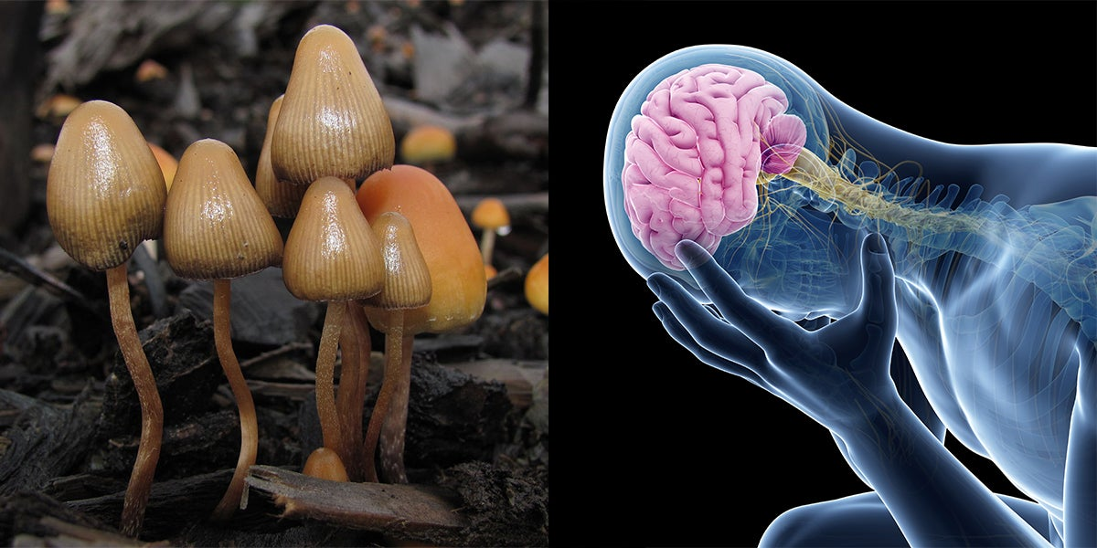 Psilocybin Could 'Reset' The Brains Of Depressed People, According To Study