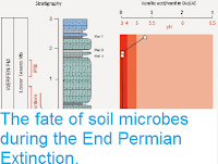 http://sciencythoughts.blogspot.co.uk/2015/01/the-fate-of-soil-microbes-during-end.html