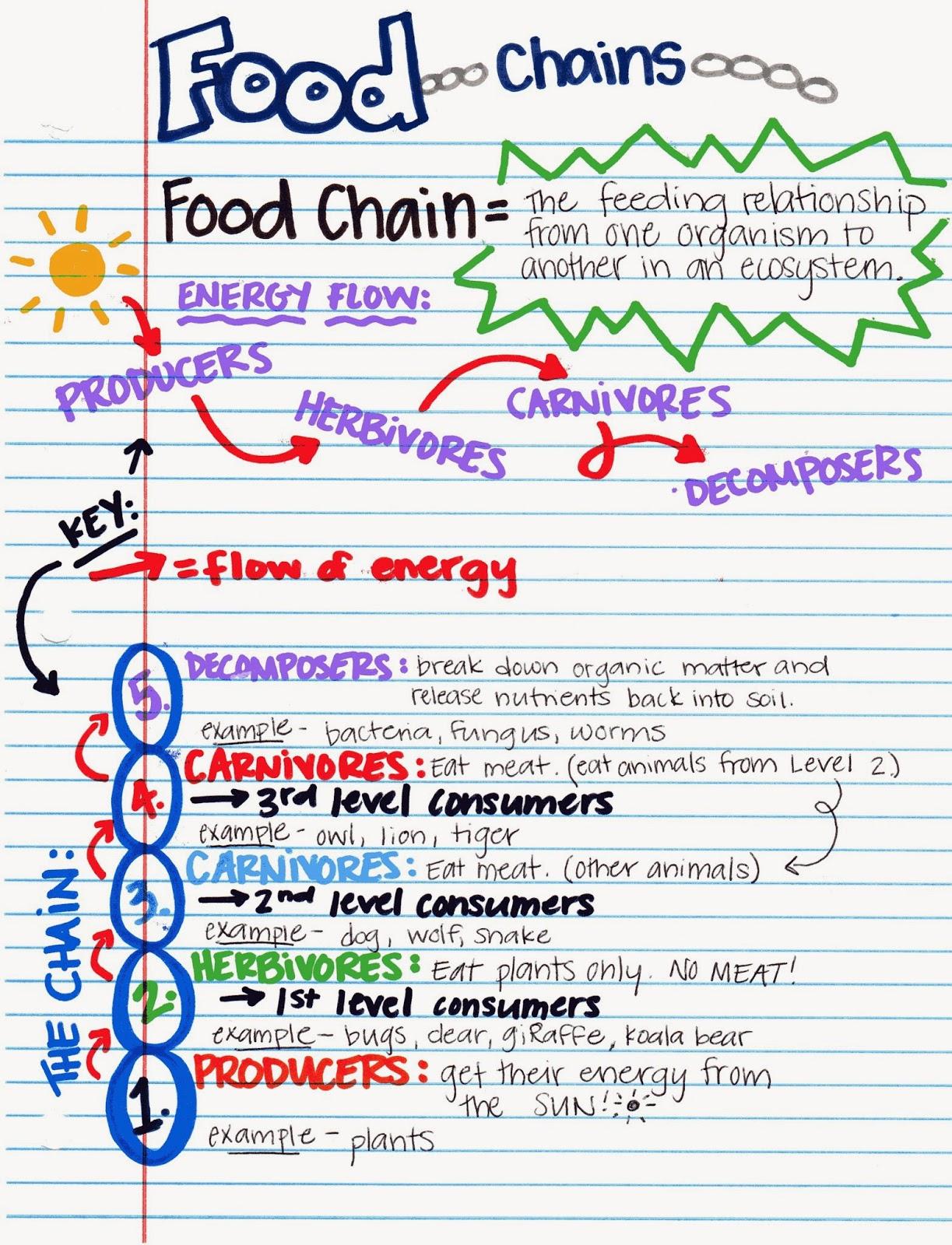 Miss V S Class Food Webs 5 9b