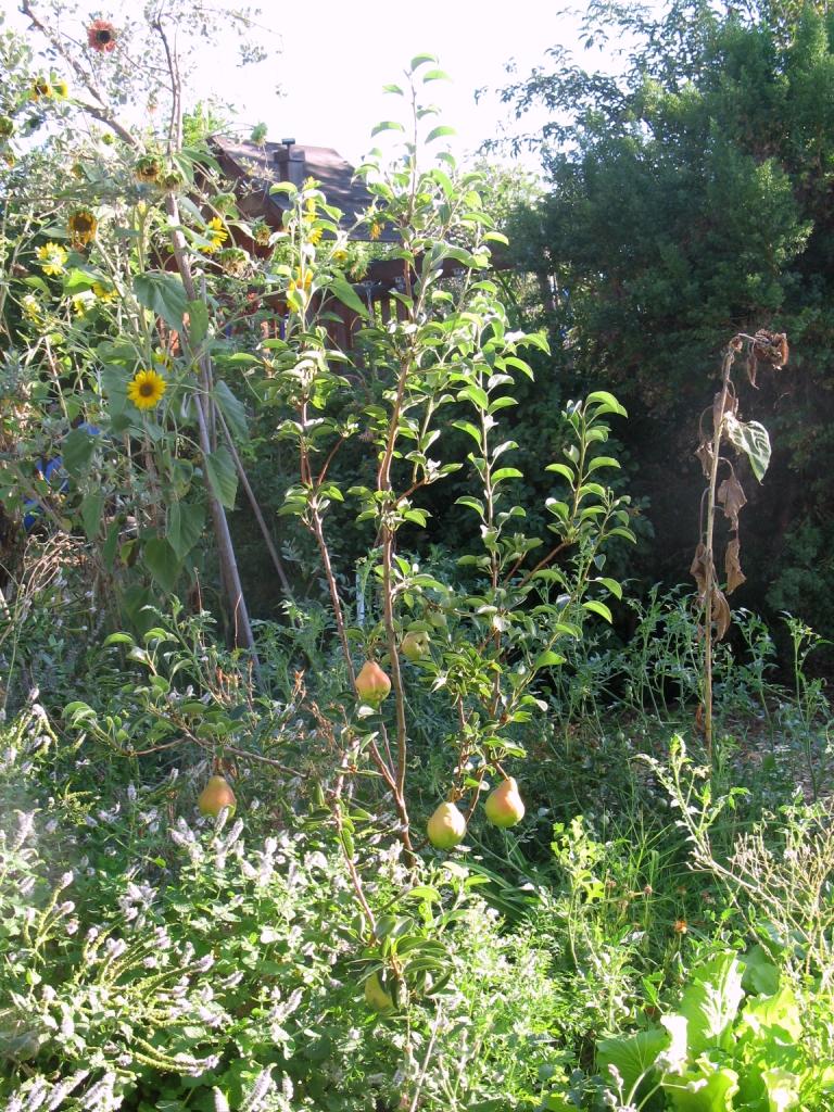 Gaia Creations Beyond Companion Planting Guild Building
