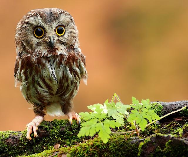 Resultado de imagem para imagens de lindas aves