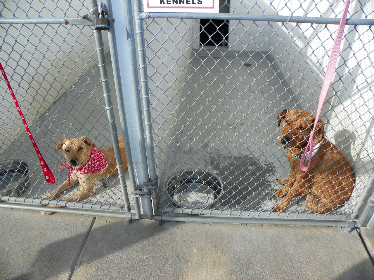 Adopting a Pet: Escambia & Santa Rosa County Animal Shelters!