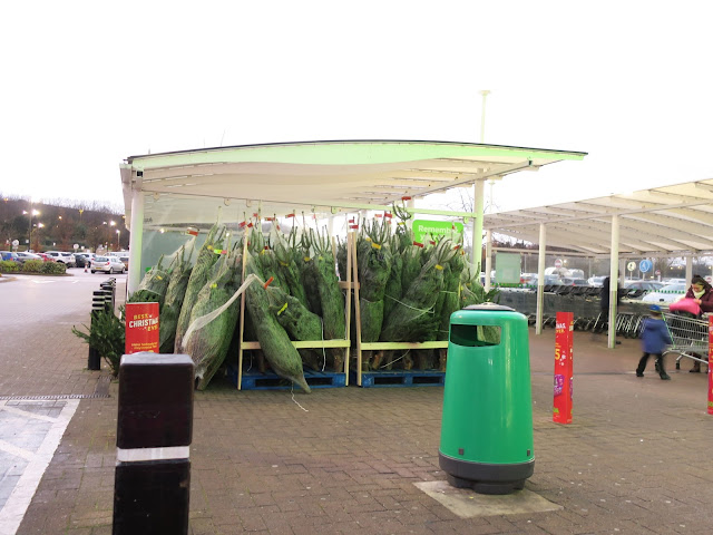 Netted Christmas trees in a shelter outside ASDA in Pudsey, West Yorkshire