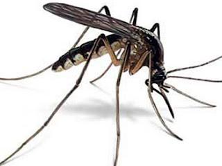 Cara mengusir nyamuk dengan Kulit jeruk