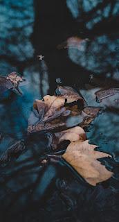 Leaf Mobile HD Wallpaper
