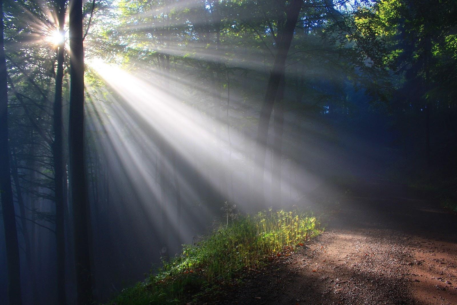 76 Gambar Pemandangan Hutan Indah Terbaik