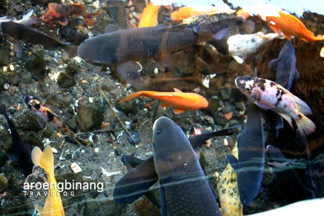 ikan pemandian cikoromoy pandeglang banten