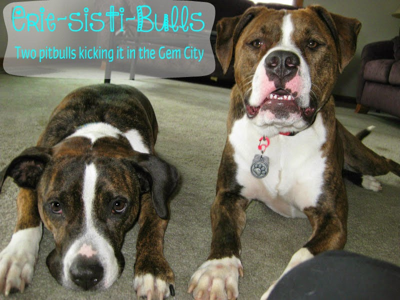Erie-sisti-Bull: Dog Friendly Shops & Restaurants - Erie, PA