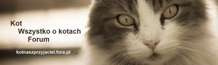 Jak Wytresować Kota Poradnik Dlaczego Kot Załatwia Się