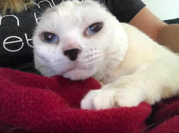 Mèo máy Doraemon của đời thực