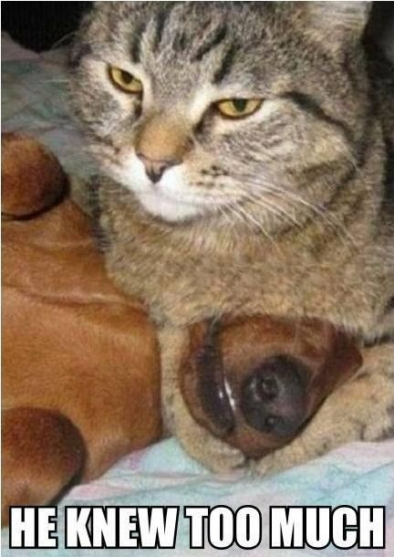 Funny Cat Dog Picture - He Knew Too Much