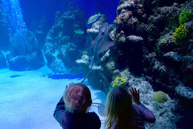 two children looking into a large glass fish tank
