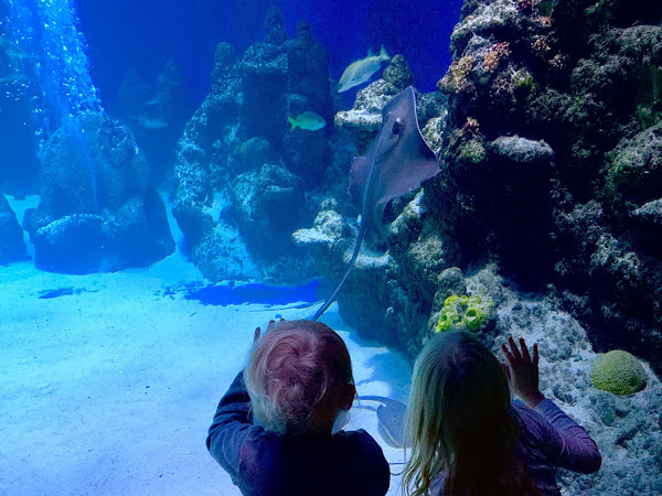 Visiting SEALIFE London With Children This Half Term