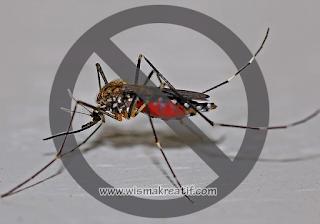 Tanaman Hias Pengusir Nyamuk