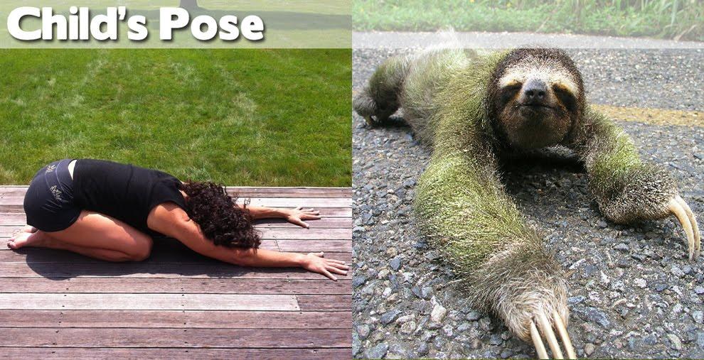 Land Of Pics Animals Demonstrating Funny Yoga Poses