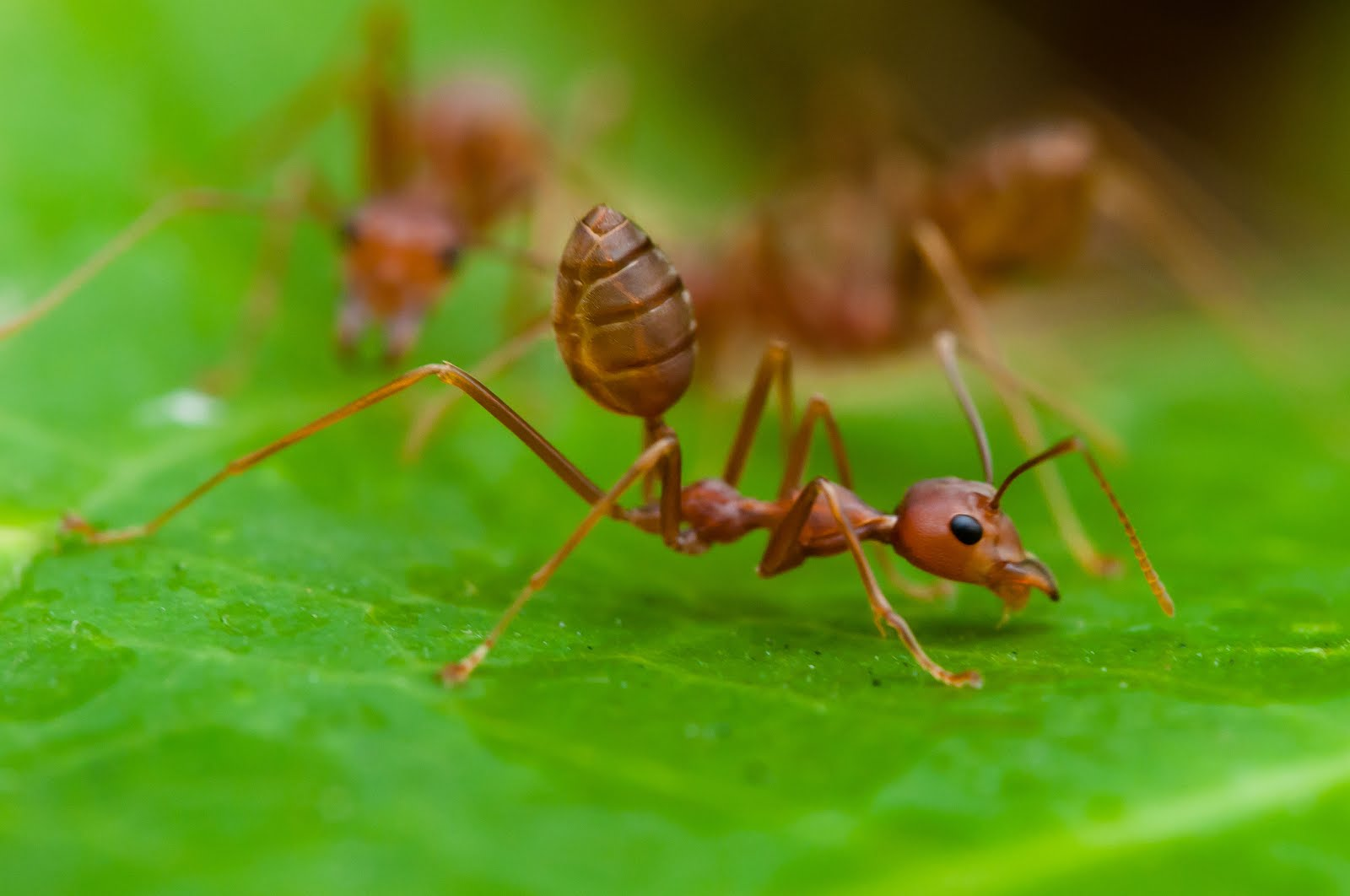 How Ants Communicate With Each Other - Ant