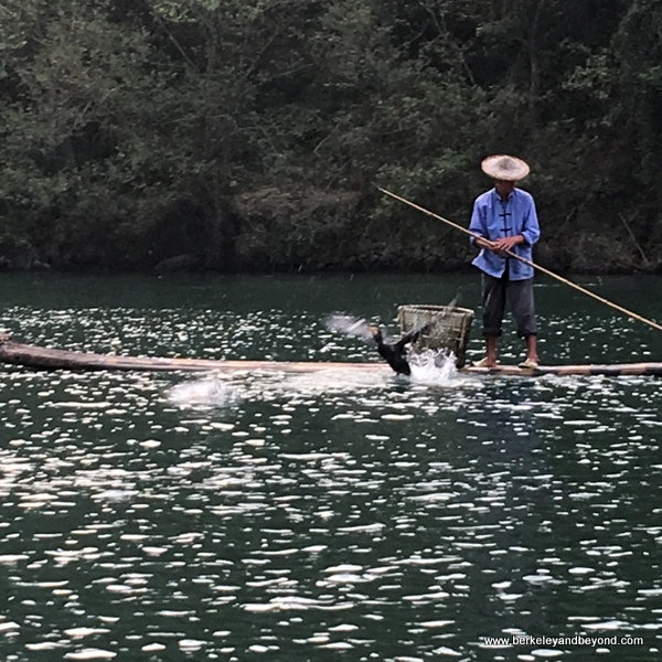 cormorant fishing is demonstrated for bamboo rafters on the Nanxi River in Yongjia Townt in Zhejiang Province, Wenzhou, China