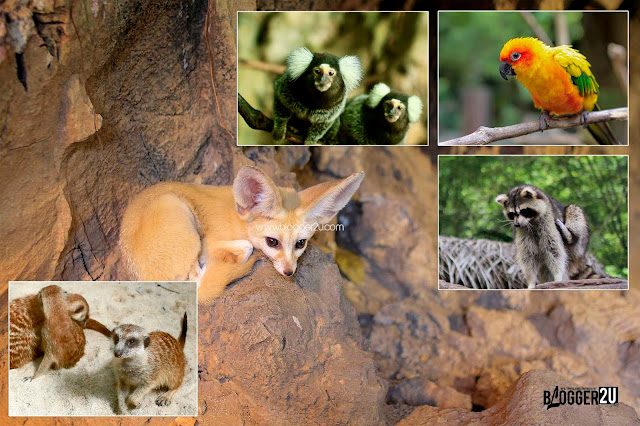 COMEL : Petting Zoo Lost World of Tambun