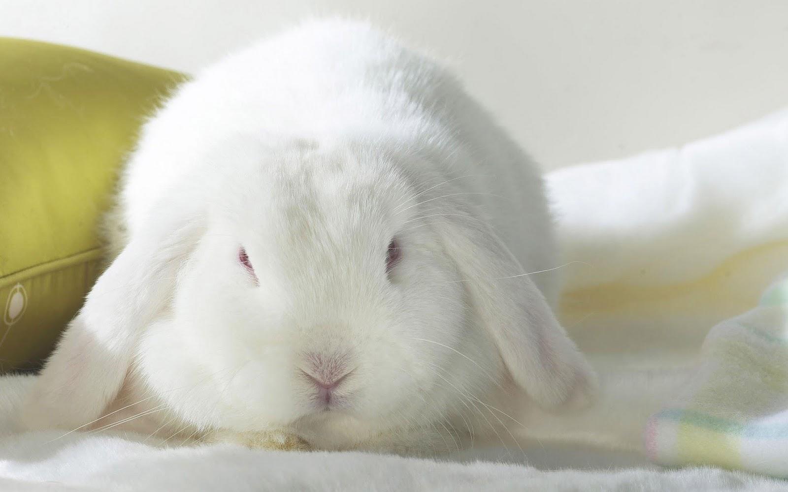cute rabbit wallpaper - photo #14