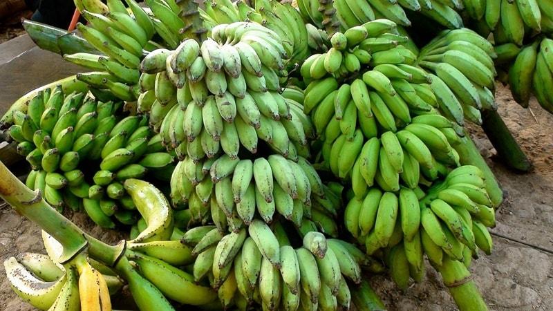ปลูกกล้วยขาย อาชีพเสริมเกษตร