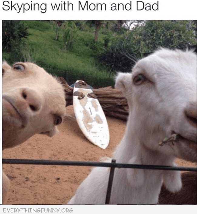 #humor #funny #fun #crazy #laughing #haha #lol #pictures #Quotes #gif