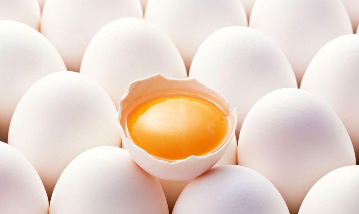 Yumurta ve İnsan Zekası