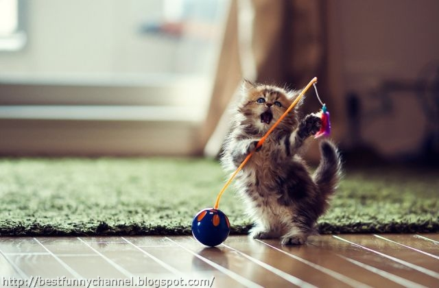 Kitten playing.