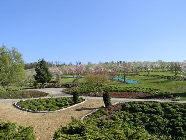 Wojsławice koło Niemczy to oaza zieleni.