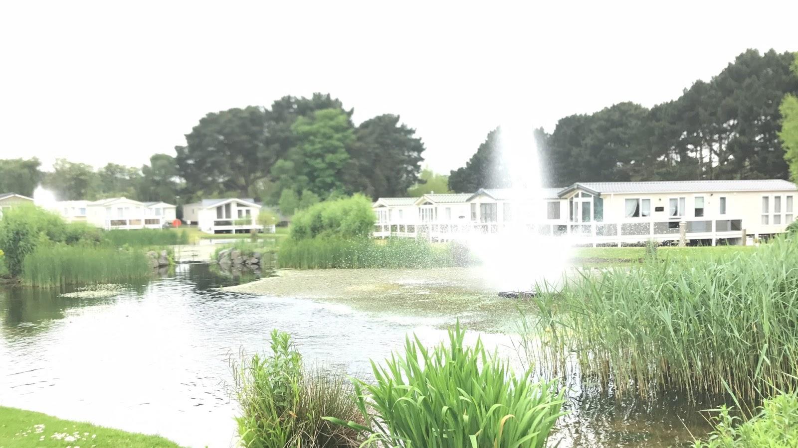 Wild Duck Duck Pond
