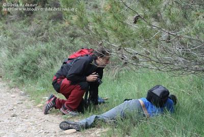 http://www.biodiversidadvirtual.org/insectarium/Testing-Punto-BV-Espacio-Pirineos-Graus-img586918.html