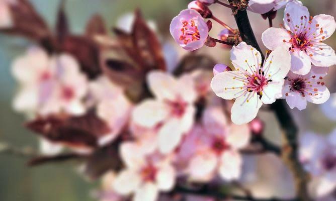 Cosas Para Photoscape Flores Y Plantas Arboles Ps: Decoración Fácil: DECORAR CON RAMAS EN FLOR