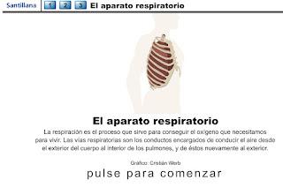 http://www.ceiploreto.es/sugerencias/animaciones/ciencias/aparespi.swf