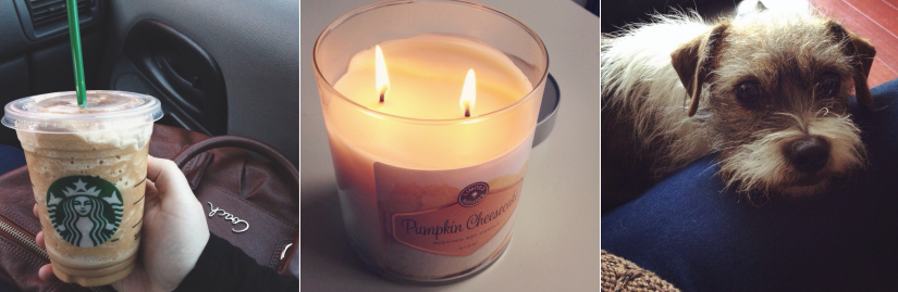 starbucks pumpkin target candle dog