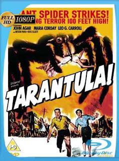 Tarántula 1955 HD [1080p] Latino [Mega] dizonHD