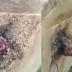 Έκοψε ένα δέντρο, αλλά δεν περίμενε ποτέ να δει ΑΥΤΟ να σέρνεται έξω… [βίντεο]