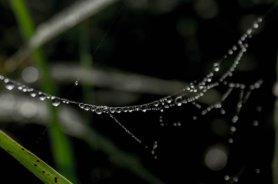 spider web photography