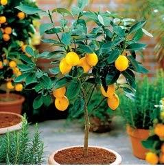 A mi manera ideas para que tu jard n se vea bonito Como tener un lindo jardin