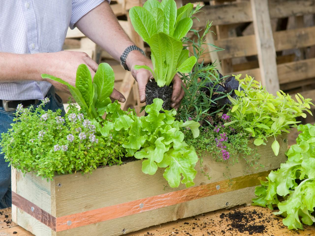 Make a Herbal Window Box ! Garden Bible