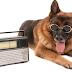 Amanhã tem Estação Animal na Rádio Folha