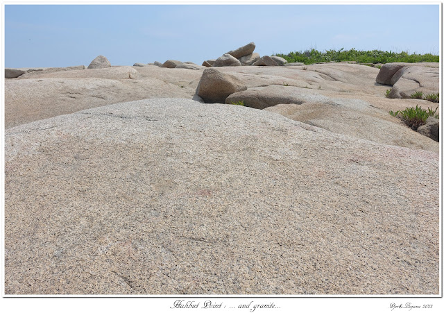 Halibut Point: ... and granite...