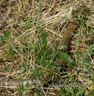 fauna selvatica nel giardino visitabile della fattoria didattica dell ortica a Savigno Valsamoggia Bologna vicino Zocca in Appennino