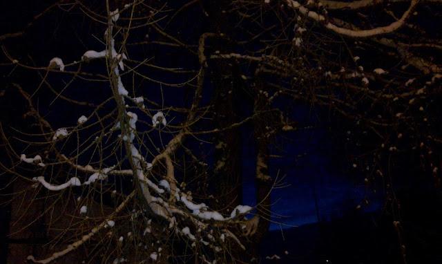 ilta, lumi, taivas, oksat
