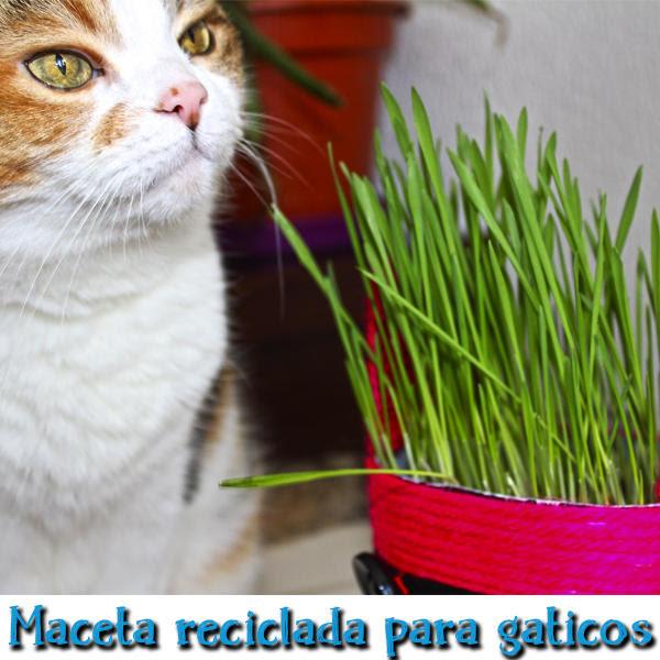 Cómo hacer con botellas recicladas una maceta para la hierba de tu mascota