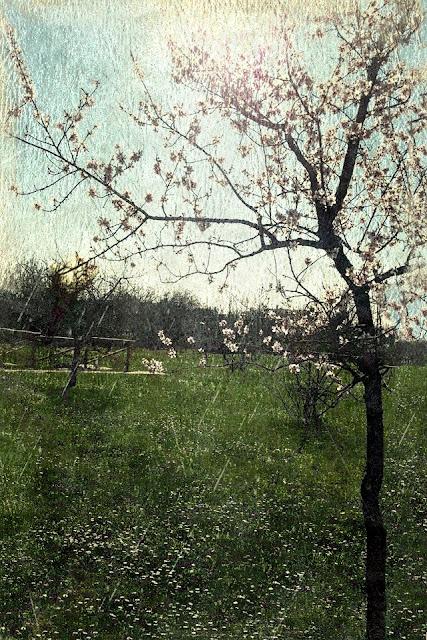 Poesia / Frammento 11 (Complicemente Primavera).