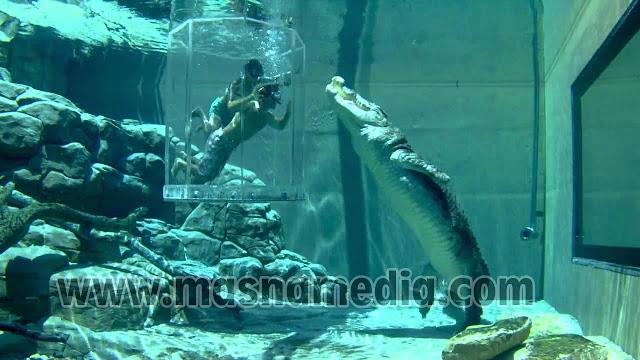 Tempat Wisata Unik Crocosaurus Cove