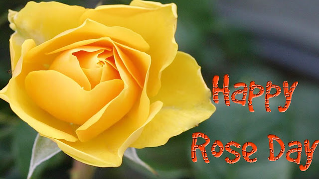 yellow-rose-day-wallpapers
