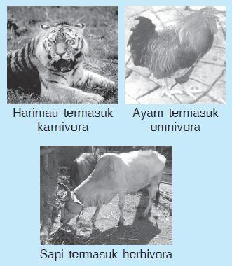 2 Komponen Penyusun Ekosistem; Komponen Biotik dan Abiotik dalam Ekosistem